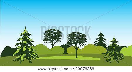 Timber Landscape