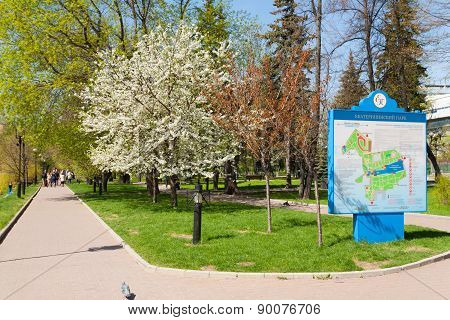 Blooming Apple Tree And The Map In Catherine Park