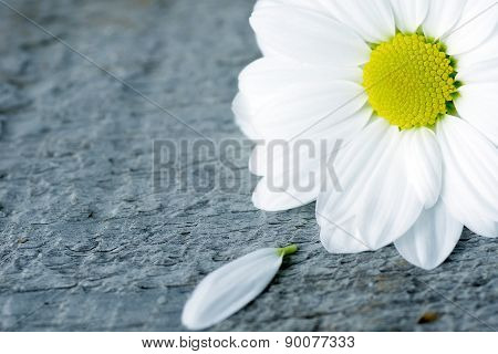 Daisy Flower With Petal On Wood
