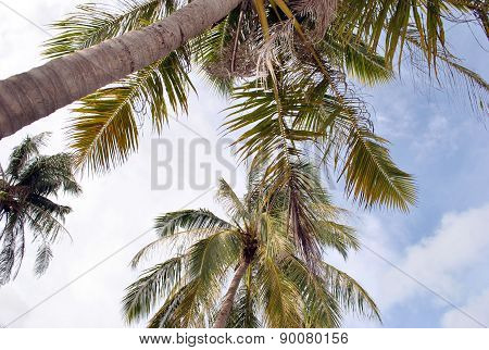 top of palmtrees