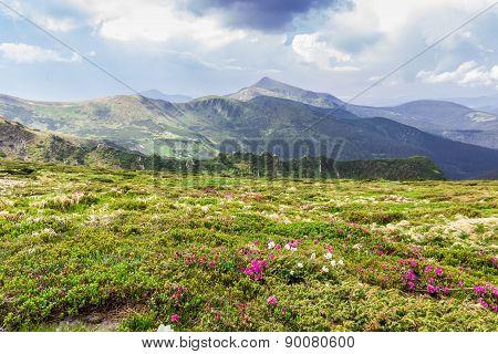 Carpathian Landscape