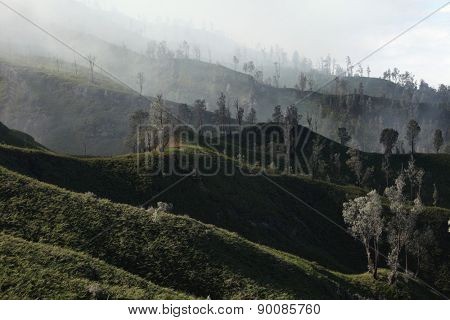 Tropical forest in the fumes of toxic volcanic gas at the slopes of Kawah Ijen volcano, East Java, Indonesia.