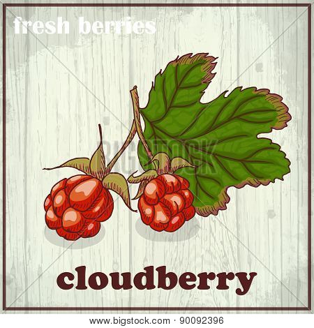 Hand drawing illustration of cloudberry. Fresh berries sketch background