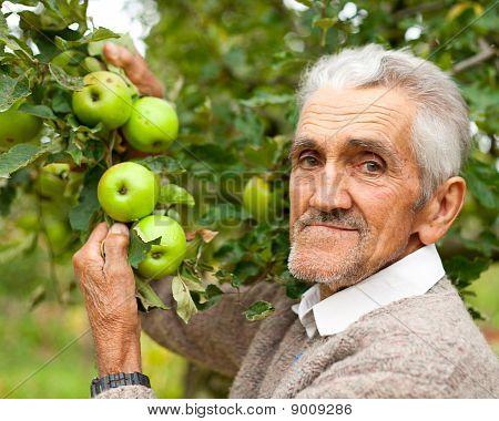 Viejo granjero y el Manzano