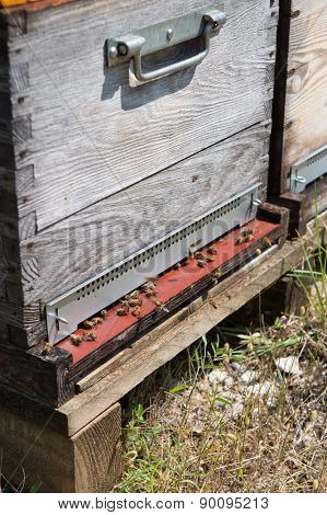 Many bee hives outdoor
