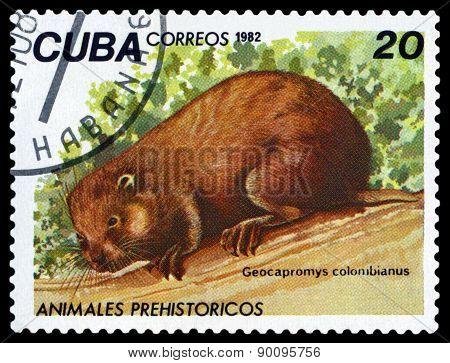 Vintage  Postage Stamp.  Geocapromus Colombianus.