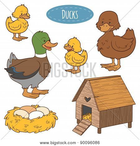 Set Of Cute Farm Animals And Objects, Vector Family Duck, Coloring Book