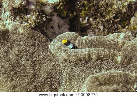 Fish in a sea anemone