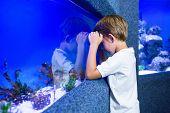 picture of algae  - Young man focusing an algae in a tank - JPG