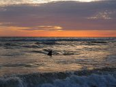 picture of gulf mexico  - A shark in the Gulf of Mexico appears near shore at sunset. ** Note: Soft Focus at 100%, best at smaller sizes - JPG