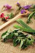 pic of sackcloth  - Green herbs and leaves on sackcloth - JPG