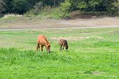 picture of pony  - young and mother pony - JPG