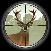 pic of rifle  - Rifle lens aiming a deer - JPG
