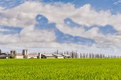 picture of silos  - Agricultural landscape with farm and silos and a sky with clouds  - JPG