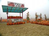 stock photo of burlington  - a pumpkin patch vendor stand in burlington washington state usa - JPG