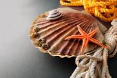 foto of scallops  - Beautiful composition of big scallop and few marine items on a gray background - JPG