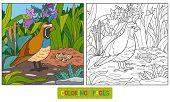 foto of quail  - Game for children - JPG