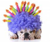 image of dog birthday  - birthday dog  - JPG