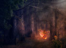 picture of fairies  - Illustration of a 3d fairy girl in a magical forest - JPG