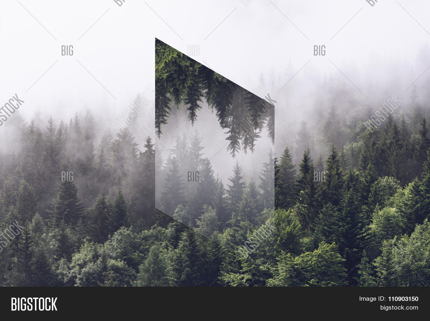 atmospheric scenic view of alpine evergreen trees shrouded in