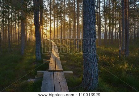 Boardwalk through the forest