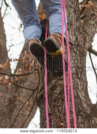 Rope Climbing In A Tree