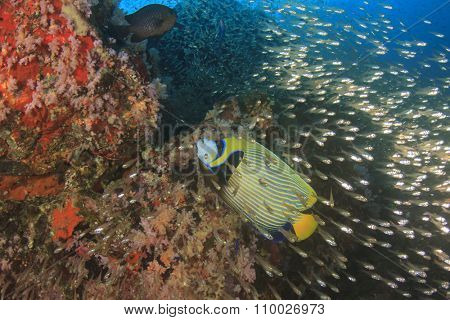 Underwater coral reef with tropical fish in ocean