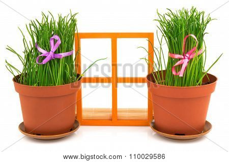 Composition with grass in flowerpots and orange wooden window