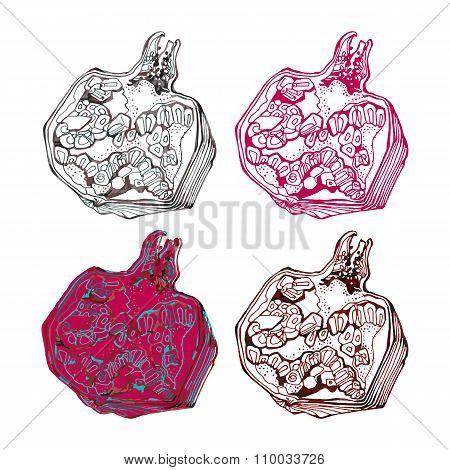 Pomegranate Illustration For Postcard, Invitation Or Lable