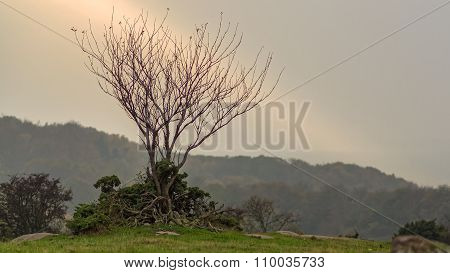 Autumns Barren Landscape, A Single Tree In A Ray Of Light