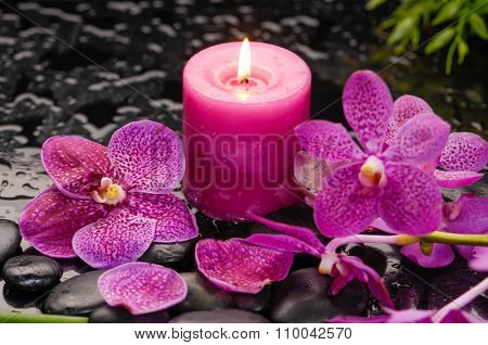 Pink orchid with plant with candle on black stones