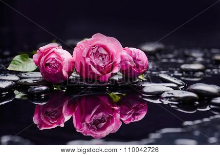 Still life with three rose and wet stones
