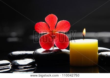 red orchid with candle and therapy stones