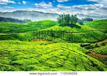 Green tea plantations. Munnar, Kerala, India