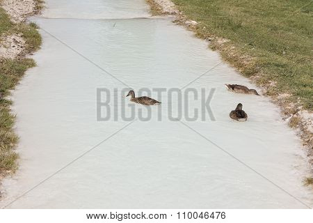 Ducks On The Natural Lake, Bird On Blue Water Photo