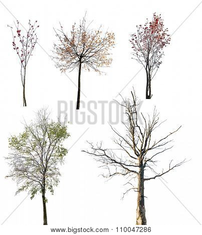 set of late autumn trees isolated on white background