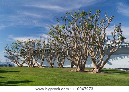 San Diego, Ca/usa - Circa January 2015: Trees Around Uss Midway Museum, San Diego,  California