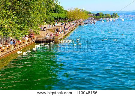 Local People Relax With The Swans On Lake Zurich. Zurich Is The