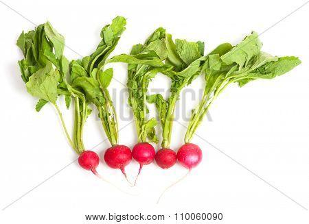 Fresh radishes isolated on white background