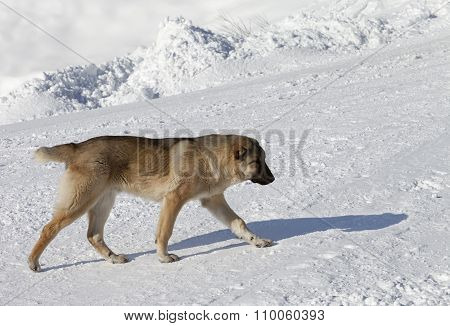 Dog On Snowy Ski Slope At Sun Day
