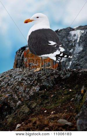 A Bird On A Rocks