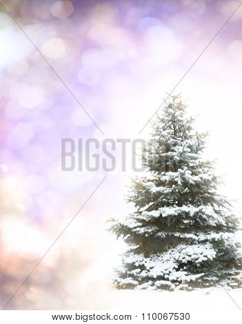 Christmas Tree - Isolated over vibrant colors background