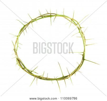 Circle Of The Plant Branch With Thorn