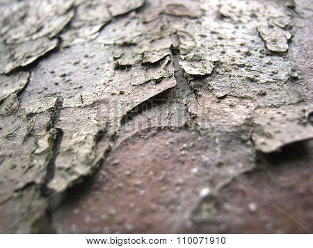 Cortex tree