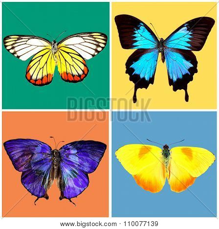 Butterflies collection on bright background