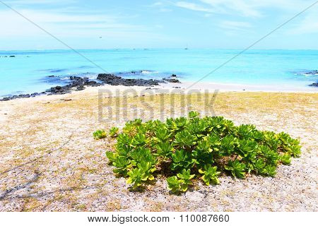Tropical beach on Ile Aux Cerfs Island ( Mauritius Island), blue sea and sunny sky on a background. Greeting from paradise.