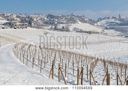 Rows of vineyards on the hill covered with white snow under blue sky in winter in Piedmont, Northern Italy.