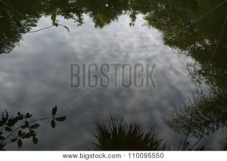 Water Reflex In Swamp