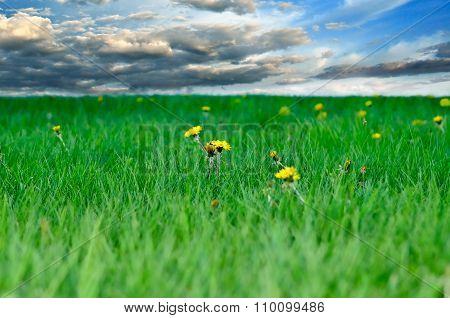 Lawn With Young Grass On A Background Cloudy Sky