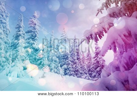 Majestic winter landscape glowing by sunlight in the morning. Dramatic wintry scene. Location Carpathian, Ukraine, Europe. Beauty world. Bokeh light effect, soft filter. Instagram toning effect.